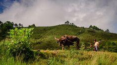 Shan State Farmer