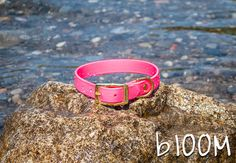 Waterproof Dog Collar in Bright Pink