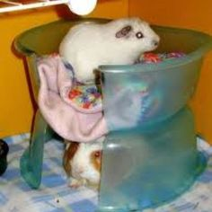 DIY-Guinea-Pig-Bowl-Hut. Would be cute for rats or make bigger for the bunnies