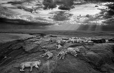 ảnh thiên nhiên hoang dã, Cuộc thi nhiếp ảnh về động vật hoang dã năm 2014 http://anh.khoahocplus.com/trai-dat/cuoc-thi-nhiep-anh-ve-dong-vat-hoang-da-nam-2014.html