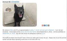 Los Angeles County Animal Control - Carson animalcare.lacounty.gov 216 West Victoria Street Gardena, CA 90248 Voice: (310) 523-9566