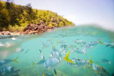 Snorkelling, The Whitsundays