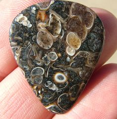 This stone guitar pick was crafted from a type of fossil called turritella agate. You can see the fossil snail shells in it. These can be purchased at www.digforcrystals.com