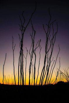 Big Bend sunset .... ~ Derrick Birdsall