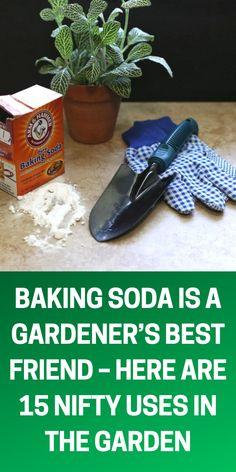 Veg Garden, Garden Soil, Fruit Garden, Garden Seeds, Garden Types, Easy Garden, Planting Seeds, Vegetable Gardening, Garden Landscaping