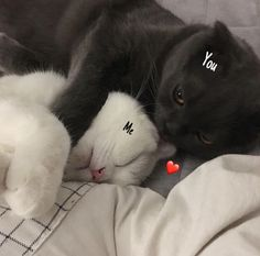These sweet kittens will make you happy. Cats are wonderful friends. I Love Cats, Cute Cats, Funny Cats, Baby Cats, Baby Animals, Cute Animals, Animals Images, Kittens Cutest, Cats And Kittens
