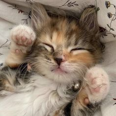 Cute Baby Cats, Cute Little Animals, Cute Funny Animals, Kittens Cutest, Cats And Kittens, Photo Chat, Cat Aesthetic, Cute Creatures, Pretty Cats