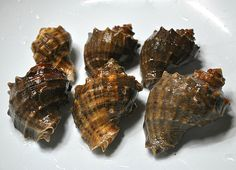 How to prep sea snails