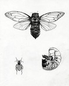 Merlijne Marell - herbarium