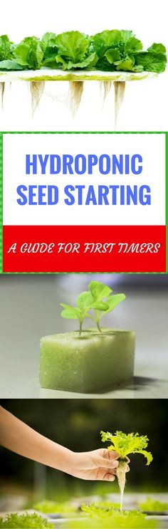 Hydroponic Gardening Hydroponics seed starting may not be every beginner's option, but understanding the basics is all it takes to make you succeed in hydroponics gardening. Aquaponics System, Hydroponic Farming, Hydroponic Growing, Growing Plants, Hydroponics, Backyard Aquaponics, Hydroponic Systems, Aquaponics Plants, Growing Gardens