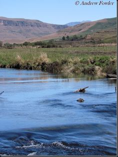 The upper Mooi River in KZN province, South Africa: Good trout water Midland Meander, Kwazulu Natal, Lush Green, Trout, Fly Fishing, Places Ive Been, South Africa, River, Explore