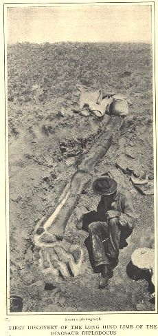 """Como Bluff_ Wyoming_""""The Bone Wars"""" First descovery of the dinosaur Diplodocus: Leg and Foot,1898"""