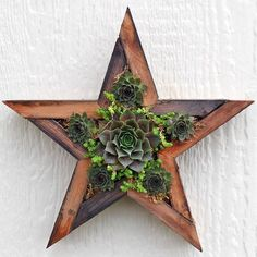 Vertical Planter - Small Star: Made from recycled wood and filled with sphagnum moss anchored by wire. Handmade by talented California artisans. Ready to fill with succulents and hang. The plugs in our wholesale trays are the ideal size for planting.