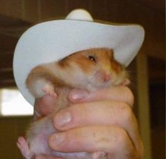 What in hamster Funny Animal Jokes, Cute Funny Animals, Funny Cute, Hamster Care, Baby Hamster, Hamster Toys, Funny Hamsters, Robo Dwarf Hamsters, Tier Fotos