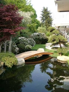 Pond backyard and landscaping