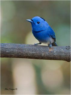 El pájaro de Twitter   LaReserva