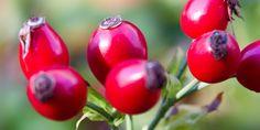 Rosa canina proprietà: 7 benefici della vitamina C naturale