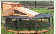 They've Turned A Trashed Trampoline into a Great Way To Raise Poultry!