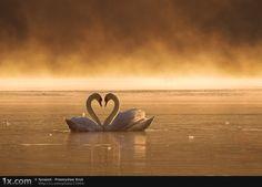 I'm in Love! Photo by Przemyslaw Kruk via 1x.com