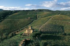 Parker Villas provides certified vacation rentals in Italy. Chianti Wine, Wine Photography, Red Grapes, Cabernet Sauvignon, Toscana, Wine Making, Wines, Vineyard, Italia
