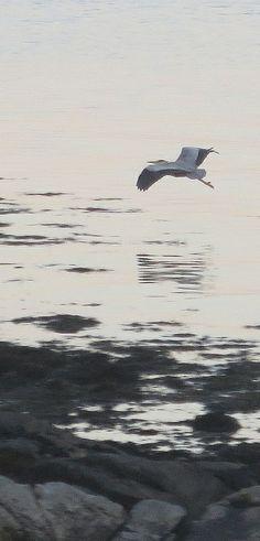 heron (ii)