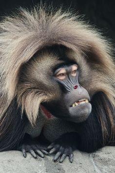 Cara de mono...