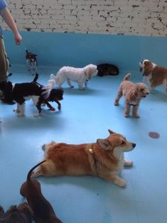 This dog who basically just gave up trying to participate in group activities with these other dogs.