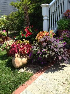 Front porch container garden.