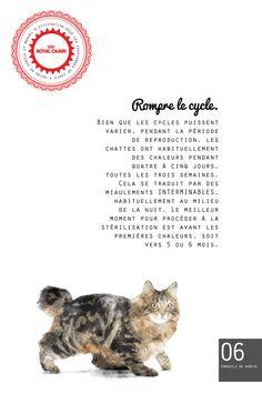 La capsule du Guide pour passionnés des chats de cette semaine traite de la façon d'éviter les chaleurs… par la stérilisation, bien entendu.