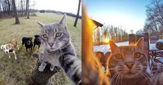 Manny is a gray tabby cat that's attracting attention for his special camera skills. More specifically, Manny is quite skilled at shooting selfies of himse