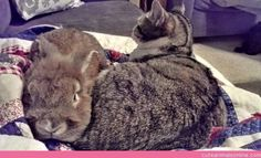 An Unlikely Friendship: Agent Scully  #cats  #cute cats  ecute
