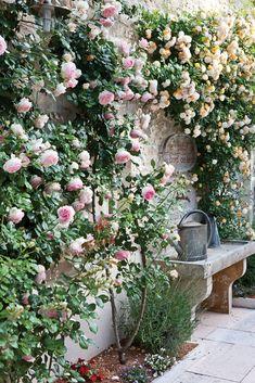 Small Cottage Garden Ideas, Cottage Garden Design, Flower Garden Design, Small Garden Design, Backyard Cottage, Cottage Gardens, Small Garden Plans, Small Courtyard Gardens, Small Gardens