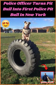 New York One, Braided Hairstyles, Sport Hairstyles, Amazing Buildings, Bull Terriers, Staffordshire Terriers, Wedding Heels, Diy Skin Care, Bottle Crafts