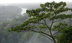 the jungles of central america in costa rica