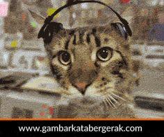 Gambar animasi kucing lucu bergerak, kucing dugem :D