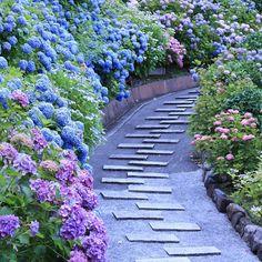 1万株の美しい紫陽花の道!京都屈指の絶景あじさい名所「善峯寺」とは | RETRIP[リトリップ]