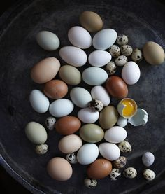 Real bird eggs make me so happy! They remind me of summer walks with my mom around the neighborhood. We would sometimes find hatched eggs in the mornings.