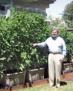 Rubbermaids rule :The Earth Tainer. How to build your own self watering container, similar to the Earthbox. I made something similar called a Global Bucket (see the Pin in my Garden Board on them) to grow tomatoes and made a box like this one for my Basil. The Basil was amazing. Id water it once in the morning and it always used just the amount of water the plants needed. Build one this year.