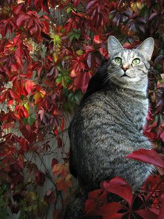 Garden gazing cat.  Looks like there another behind it?