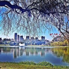 Parque do Ibirapuera by @araujoluucas  #saopaulocity #parquedoibirapuera