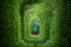📍 Tunnel of love - 📸 Amos Chapple | Discovered via Mustsee - http://mustsee.earth