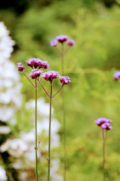 Semis spontanés dans notre jardin en mouvement, @Gilles Clément Gilles Clement, Dandelion, Plants, Be Nice, Buenos Aires, Natural Garden, Daffodil, Garden Art