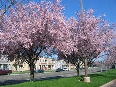 Rancho Cordova, CA : Spring in Capital Village Rancho Cordova    Read more: http://www.city-data.com/picfilesv/picv35856.php#ixzz25xvEmGUF