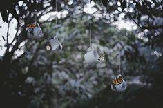 borboletas em voo