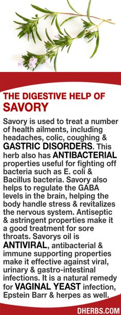 Savory helps treat health ailments, including headaches, coughing  gastric disorders. This herb also has antibacterial properties useful for fighting off bacteria such as E. coli. Savory helps to regulate the GABA levels in the brain, helping the body handle stress  revitalizes the nervous system. Antiseptic  astringent properties help sore throats. The oil is antiviral, antibacterial  immune supporting making it effective against viral, urinary  gastro-intestinal infections. #dherbs