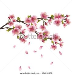 Sakura blossom pink - Japanese cherry tree with flying petals isolated on white background. Vector illustration - stock vector