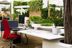 No te encantaría tener un escritorio así!!?!!  Para muchos, su lugar de trabajo es donde pasan la mayor parte del tiempo. Dale vida a tu #espacio de trabajo!  #DiseñoJardines #Paisajismo #Bonsai #Oficina #Plantas #Ambiente  Wouldn't you love have a desk like this!!?!!  For many, the workplace is where they spend most of the time. Liven up your workspace!  #GardensDesign #Landscaping #Bonsais #Office #Plants #Decor
