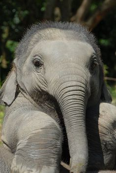 What an adorable baby #elephant