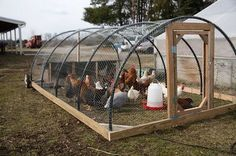 Raising chickens has gained a lot of popularity over the past few years. If you take proper care of your chickens, you will have fresh eggs regularly. You need a chicken coop to raise chickens properly. Use these chicken coop essentials so that you can. Backyard Chicken Coops, Chicken Coop Plans, Building A Chicken Coop, Diy Chicken Coop, Chickens Backyard, Hoop House Chickens, Portable Chicken Coop, Chicken Feeders, Simple Chicken Coop