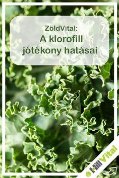 A zöld növények a legjobb lúgosító ételek közé tartoznak. Ezenkívül értékes tápanyaggal töltik fel a szervezetet: könnyen felszívódó vitaminokkal, ásványi anyagokkal, rosttal, aminosavakkal, enzimekkel, amelyek segítenek semlegesíteni a vérben és a szövetekben lévő savakat. A klorofill kitágítja a véredényeket, így pozitív hatást fejt ki a vérnyomásra és a szívbetegségekre, mivel javul a vérkeringés és a sejtek vérellátása. A klorofill segíti a vér sejtjeit, hogy ellássák oxigénnel a test… Superfoods, Herbs, Super Foods, Herb, Medicinal Plants